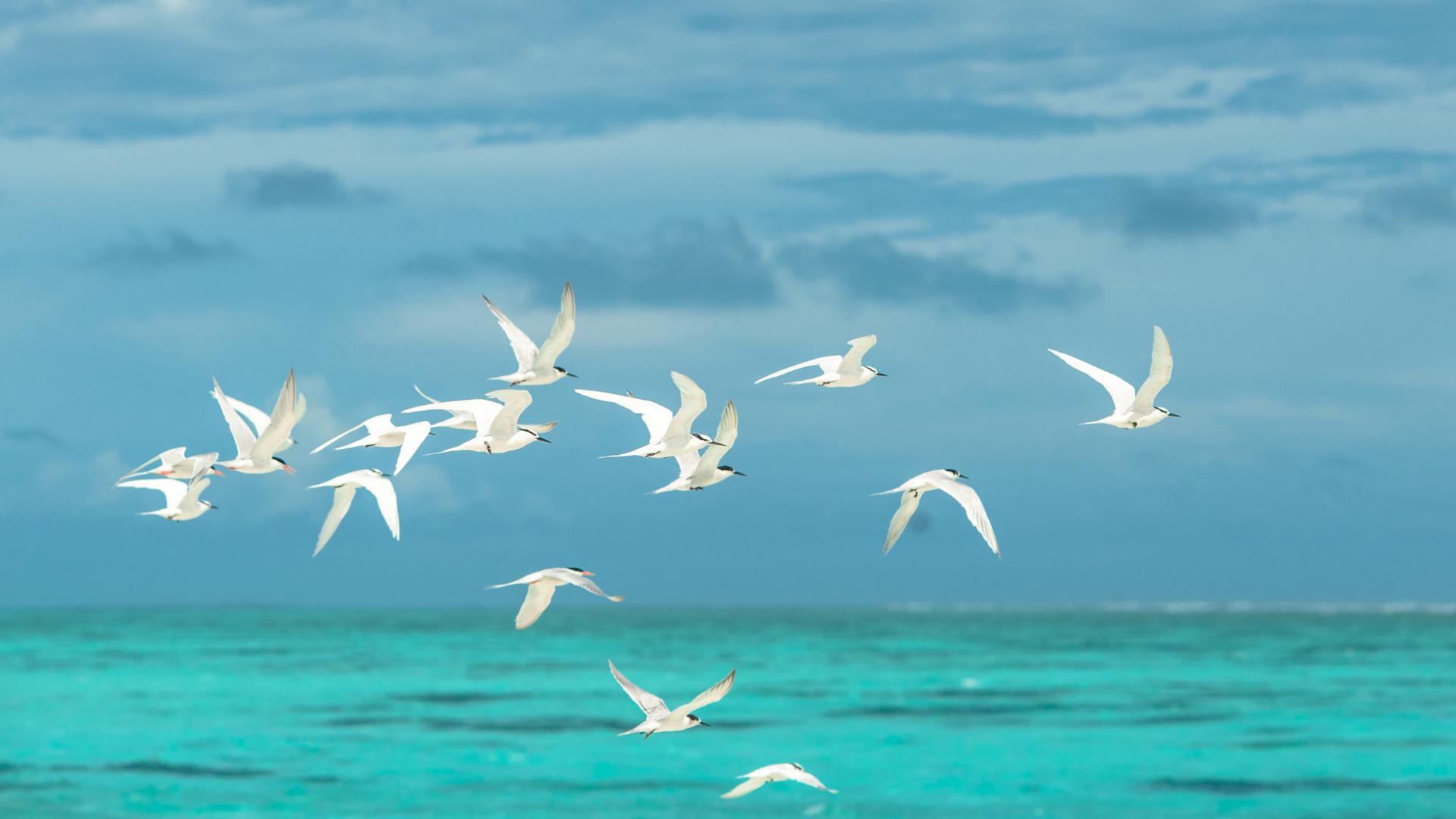 white-seagulla-flying